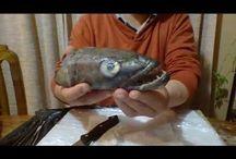 Colección de  otolitos / Colección de otolitos de peces chilenos y de el mundo. Me interesa establecer comunicación con otras personas que coleccionen para intercambiar información y ejemplares.
