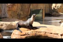 Videos  / Have you checked out our YouTube Channel? http://www.youtube.com/memphiszoo