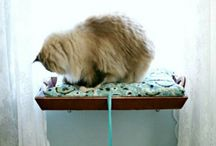 Animal Fun / Cool and fun things for pets  / by Marie-Noel Voyer-Cramp