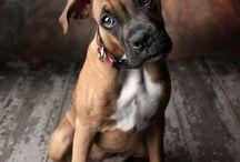 Portrait - Pet - Photography