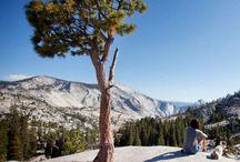 Pet Friendly Travel / by Tenaya Lodge at Yosemite