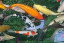 Vissen | Poissons