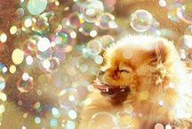 ~dream dog~