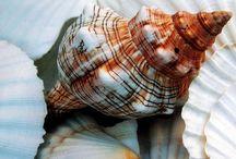 Sea_shells