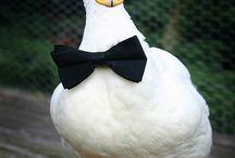 Ördek (Duck)