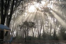 Ananda Meditation Retreat / Ananda Meditation Retreat -- retreat into nature.http://www.meditationretreat.org/