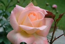 Natures Beauty / by Joyce Langrell