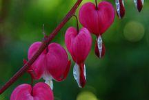 Çiçekler - flowers