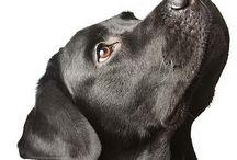 Great dog pics