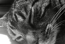Caticosis / All things in my feline world