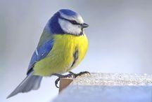 Les oiseaux mes amis