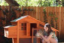 Animals Garden