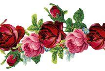 Rosessss