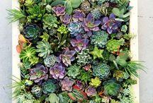 Gardens and outdoor ideas