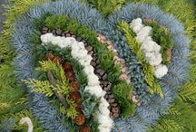 zahrada,kvety,
