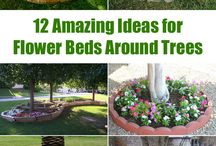 raised beds around trees