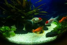 My gold fish and dog :))