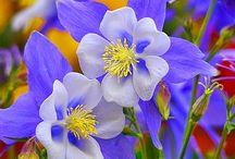 Flori foto