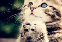 Chats / Des chats!!