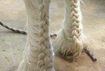 Horse Style
