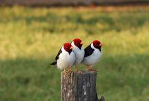 Pássaros / Cuidar da natureza é cuidar de nós mesmos... Alegrar o canto dos pássaros é fazer sorrir a alma e dar o verdadeiro sentido pra vida...           Kátia Maria