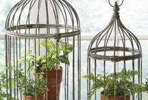 Birdcages and houses / by Donna Orton