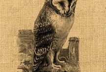 Art projects: Flights of fancy  / birds, butterflies, owls, feathers... / by Jane Hastings