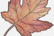 ovi ősz