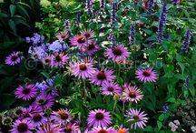 My garden (one day)