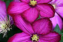 flores por montón
