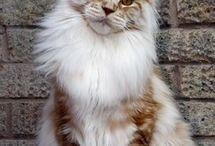 szép cicák