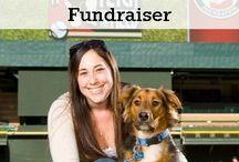 Fundraising for Fido