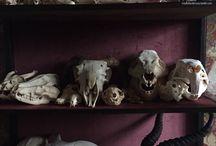 bones/skeleton/skull