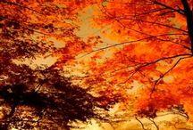 Majestic Autumn / by Ursula Keogh