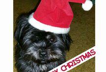 My dog Twinny
