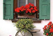 """Look Through the Window / """"Never hesitate to open new windows in your life!""""  Mehmet Murat Ildan"""