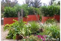 all-star plants / grdn2