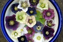 Garden365 - Freshly Cut / Faboulous bouquet ideas for your home grown wonders.