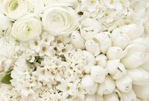 White flowers...fiori bianchi / Bianco..un colore pulito.. Puro come i sentimenti sinceri... ATTENZIONE NON PIÙ di 5 pin al giorno o verrete BLOCCATI