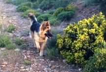 Dogitakia  / pictures of my beautiful dogs or other dogs, they are all beautiful