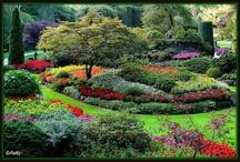 Landscaping & Gardening / by Gwen