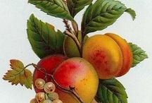 East Fruit rebrand