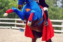 iona's horse fancy dress ideas