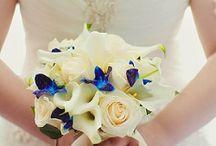 Bridal Veil Dreams / Everything Wedding
