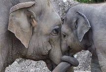 ELEPHANTS / by Beth Owens