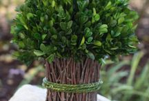 Preserved Boxwood Assortment / Our Preserved Boxwood designs are a natural evergreen, treated to preserve the beauty of the plant which is best preserved by lightly misting once a month and should not be placed in direct sunlight…this will aid in keeping its bold color for a lifetime.
