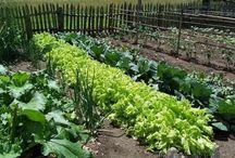 Сад Органическое земледелие