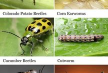 Insects & Disease in your Yard