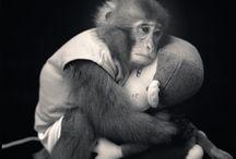 Cool monkey shit / by Jose Eslinger Caloca