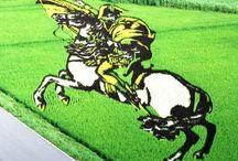Живые картины на рисовых полях Японии / Если происхождение кругов на полях вызывает споры, то яркие рисунки на обширных территориях Японии имеют вполне конкретное и разумное объяснение. Каждый год японские земледельцы засеивают поля несколькими сортами риса по заранее продуманным схемам. http://compas.info/%D0%B6%D0%B8%D0%B2%D1%8B%D0%B5-%D0%BA%D0%B0%D1%80%D1%82%D0%B8%D0%BD%D1%8B-%D0%BD%D0%B0-%D1%80%D0%B8%D1%81%D0%BE%D0%B2%D1%8B%D1%85-%D0%BF%D0%BE%D0%BB%D1%8F%D1%85-%D1%8F%D0%BF%D0%BE%D0%BD%D0%B8%D0%B8/